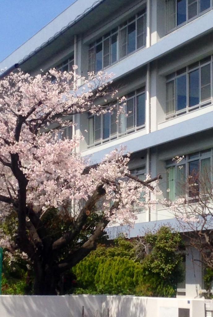 校舎風景(春)